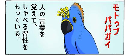 papagai1.jpg